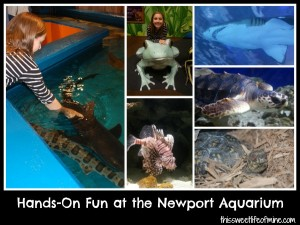 The Newport Aquarium: Cincinnati-Area Field Trip