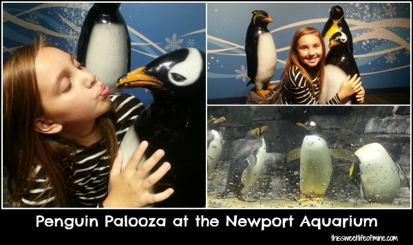 Penguin Palooza at the Newport Aquarium #homeschool #fieldtrip | embarkonthejourney.com
