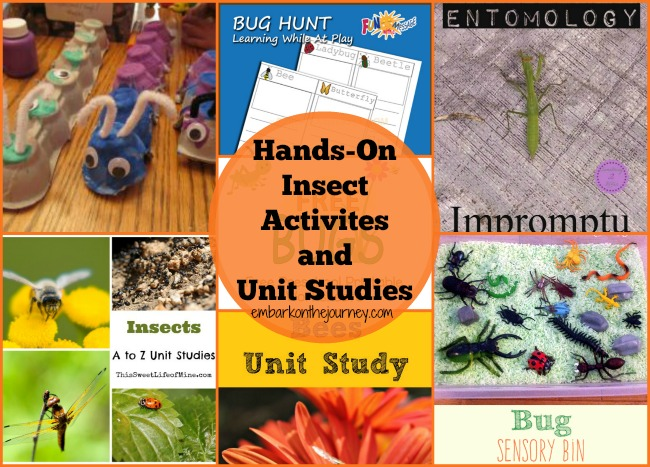 Fun hands-on activities and unit study resources for learning about insects. | embarkonthejourney.com