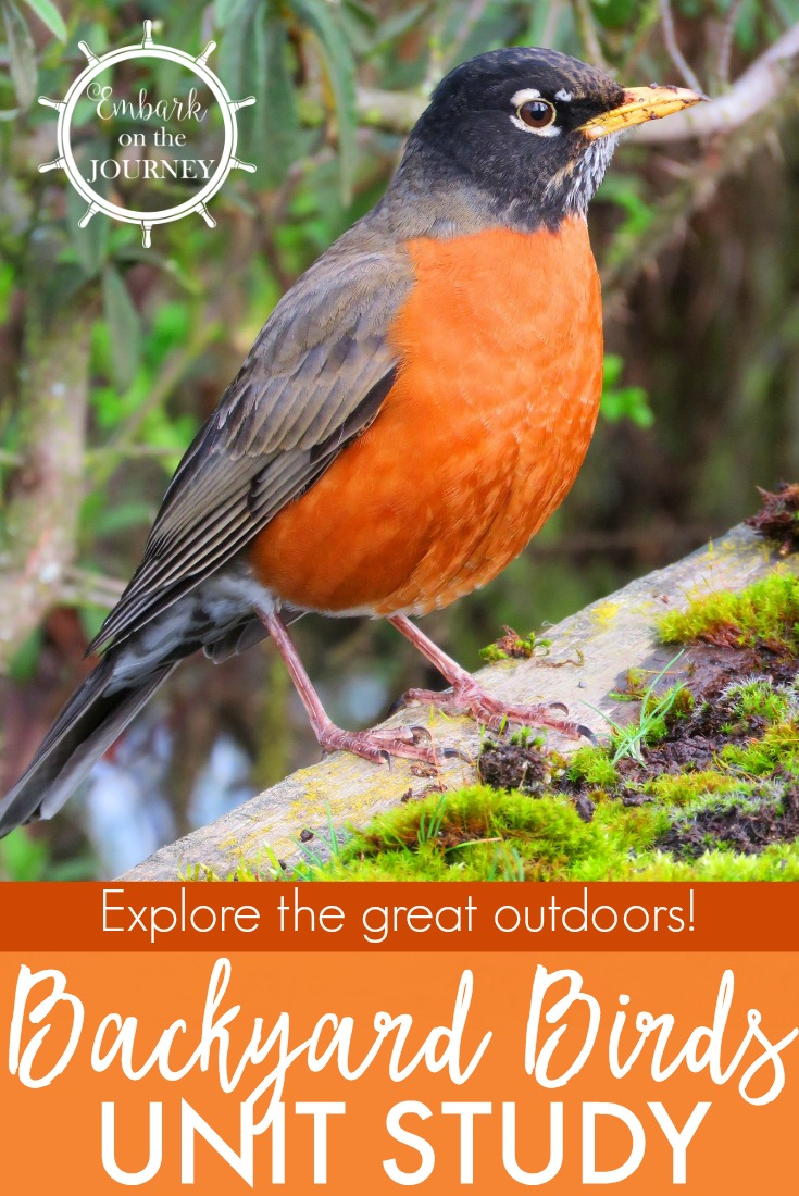Kids Will Love Studying The Birds In Their Own Backyards With This Fun  Study! It