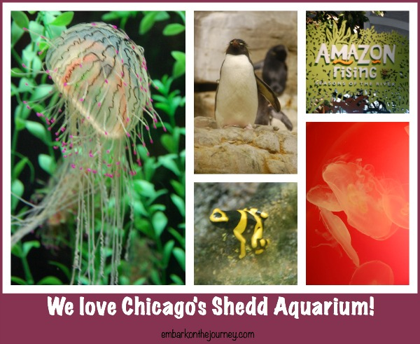 Chicago's Shedd Aquarium | embarkonthejourney.com