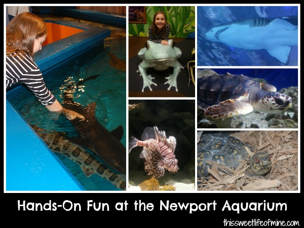 Hands-On Fun at the Newport Aquarium #homeschool #fieldtrip | embarkonthejourney.com