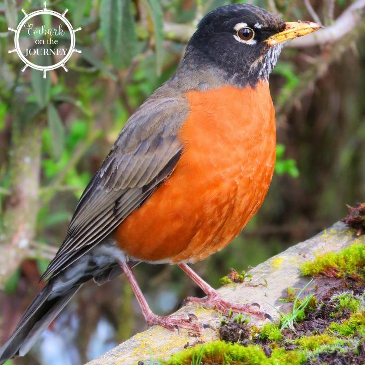 Engaging Backyard Birds Unit Study for Kids in K-5