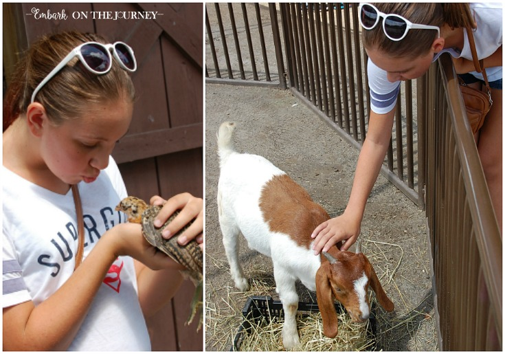 My daughter's favorite spot on the Biltmore grounds is the petting zoo! | embarkonthejourney.com