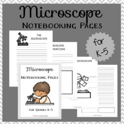 Kids will love exploring the world around them and recording their observations on these notebooking pages! There are pages appropriate for learners in grades K-5. | embarkonthejourney.com