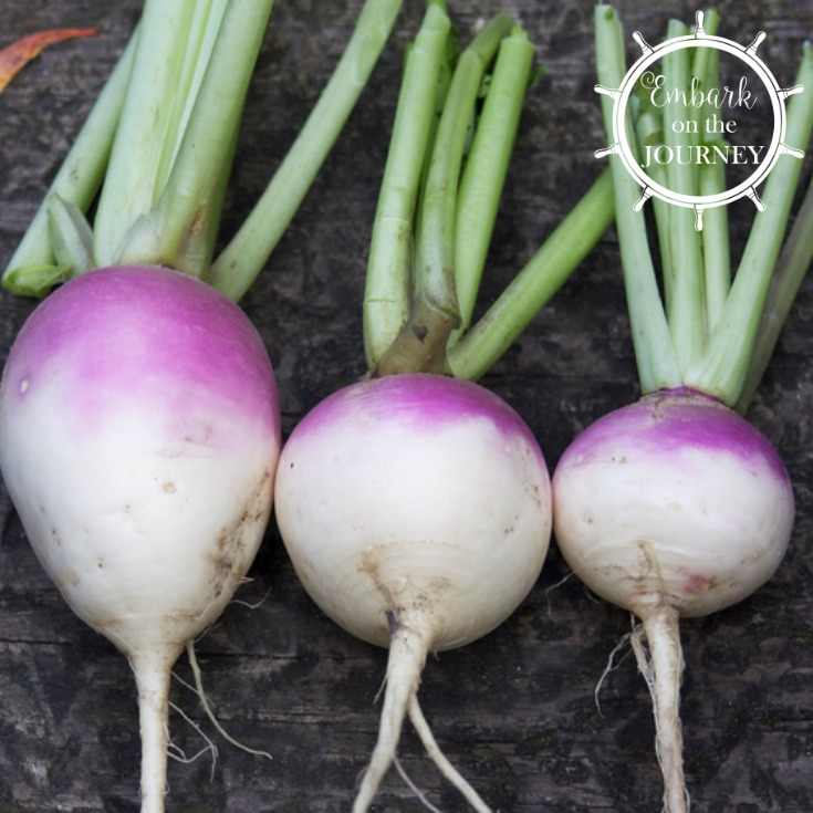 The Enormous Turnip Activities for Early Years