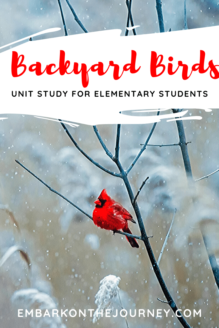 Backyard Birds Unit Study